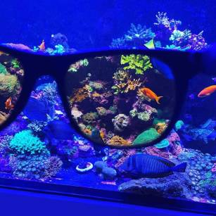 D-D  Coral Viewing Glasses - okulary z filtrem