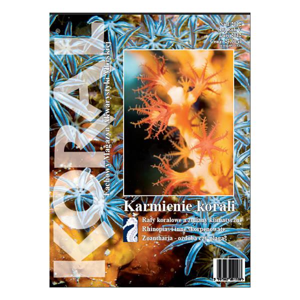 magazyn-koral-1-12.jpg